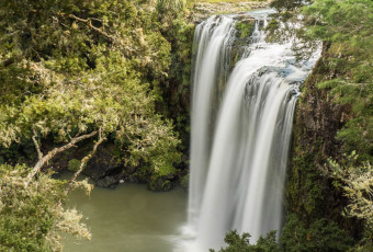 Whangarei Falls in New Zealand (Oceania)